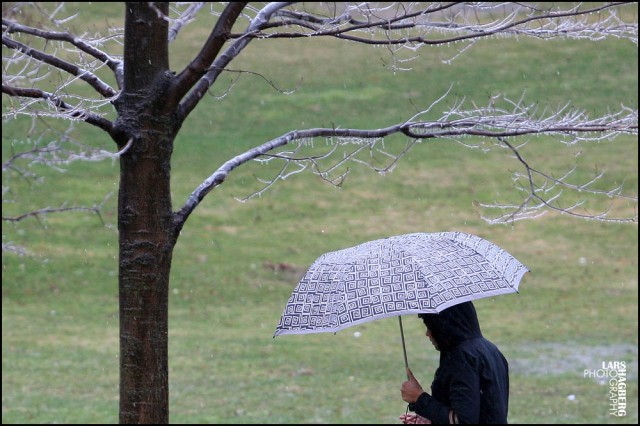 A woman walks with a red umbrella in a park with freezing rain on the trees in Kingston, Ontario on  April 12, 2013.  THE CANADIAN PRESS IMAGES/Lars Hagberg